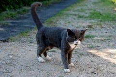 Gniewny kot patrzeje psa obrazy royalty free