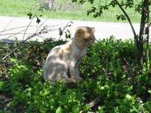 gniewny kot w trawie obraz royalty free