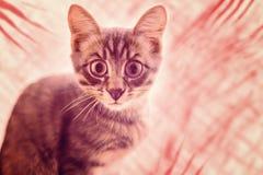 Gniewny kot z dużymi oczami obraz stock