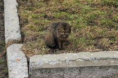 Gniewny kota zbliżenie obraz royalty free