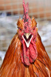 Gniewny ptak obraz stock