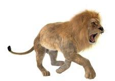 Gniewny lew zdjęcie stock