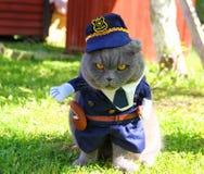 Gniewny milicyjny kot obrazy stock