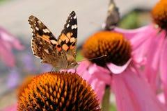 Gniewny motyl zdjęcia stock