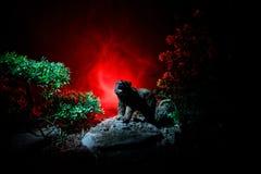 Gniewny niedźwiedź za pożarniczym chmurnym niebem Sylwetka niedźwiedź w mgłowym lasowym ciemnym tle zdjęcie royalty free
