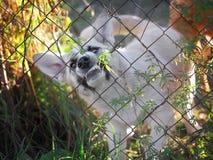 Gniewny pies w stalowej klatce Zdjęcie Royalty Free
