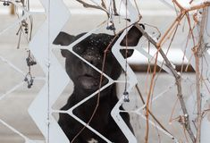 Gniewny pies za ogrodzeniem Obrazy Stock