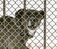 Gniewny pies za ogrodzeniem zdjęcia stock