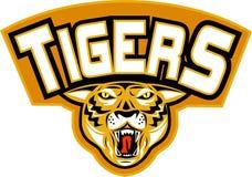 gniewny przodu głowy tygrys Zdjęcia Stock