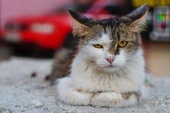 Gniewny przybłąkany kot fotografia royalty free