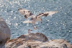 Gniewny przyglądający seagull na jaskrawym niebieskim niebie zdjęcia stock
