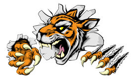 Gniewny tygrys bawi się maskotki Obraz Stock