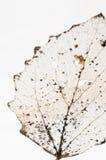 Gnijący liścia abstrakt Fotografia Stock
