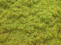 Gnije zbierającej trawy w dużym zielonym okropnym odoru kopu w dalekim kącie ogród Fotografia Royalty Free
