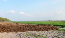 gnojowy wzgórze Zdjęcia Stock