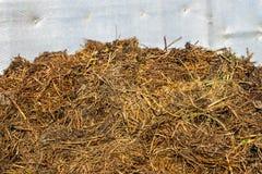 Gnojowy wzgórze Obrazy Stock
