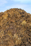 Gnojowy wzgórze Obraz Royalty Free