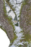 Gnom im Baum mit Schnee Stockfotos