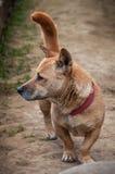 Gnome dog outdoors Royalty Free Stock Image