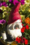 Gnome in the garden. A gnome in the garden surrounded by flowers Royalty Free Stock Image
