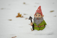 Gnome in the snow. Photograph of a garden gnome in the snow Royalty Free Stock Photo
