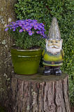 Gnome standing on Tree Stump next to Aster Flowers Stock Photography
