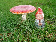 Gnome and Toadstool Royalty Free Stock Images