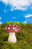 Gnome toadstool stock photos