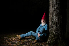 Gnome under tree 5. A venerable garden gnome relaxes under a forest tree Royalty Free Stock Photos