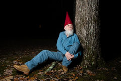 Gnome under tree 2. A venerable garden gnome relaxes under a forest tree Stock Photography