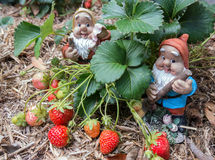 Gnomen in tuin stock afbeelding