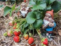 Gnomer i trädgård fotografering för bildbyråer