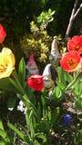 gnomes Imagens de Stock Royalty Free