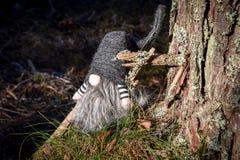 Gnomo da floresta pelo pinheiro Imagens de Stock Royalty Free