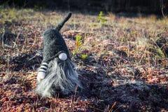 Gnomo della foresta su muschio fotografia stock libera da diritti