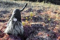 Gnomo della foresta su muschio Fotografia Stock
