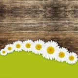 Gänseblümchen blüht Hintergrund Stockfotografie