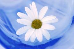 Gänseblümchen in einem Glas Lizenzfreie Stockfotos