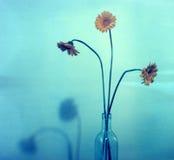 Gänseblümchen (polaroidfilm) Stockfotografie