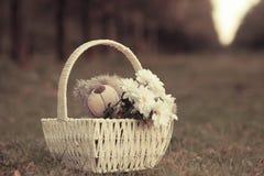 Gänseblümchen und Teddybär Stockfotografie