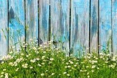 Gänseblümchenblumen auf einem Hintergrund des Bretterzauns Stockbild