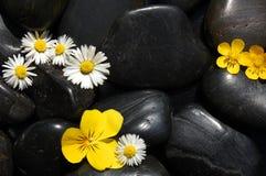 Gänseblümchenblumen auf schwarzen Steinen Stockbilder
