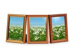 Gänseblümchenblumen in den Bilderrahmen Stockbilder
