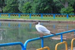 Gnuśny Seagull na wierzchołku ogrodzenie zdjęcia stock