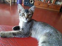 Gnuśny łapać mysz kota zdjęcia royalty free