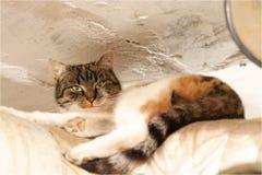 Gnuśny domowego kota lying on the beach na drymbie i nagrzaniu Cały dzień kłama na pu Wielo- barwiony kota relaksować Expresion zdjęcie royalty free