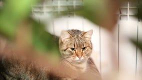 Gnuśny kot chuje za kwiatami zdjęcie wideo