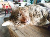 Gnuśny kot jest sen na stole fotografia stock