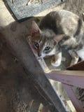 Gnuśny kot na letnim dniu obrazy royalty free