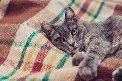 Gnuśny kot relaksuje na miękkiej koc Zwierzęta domowe, styl życia, wygodna jesień lub zima weekend, zimnej pogody pojęcie zdjęcie royalty free